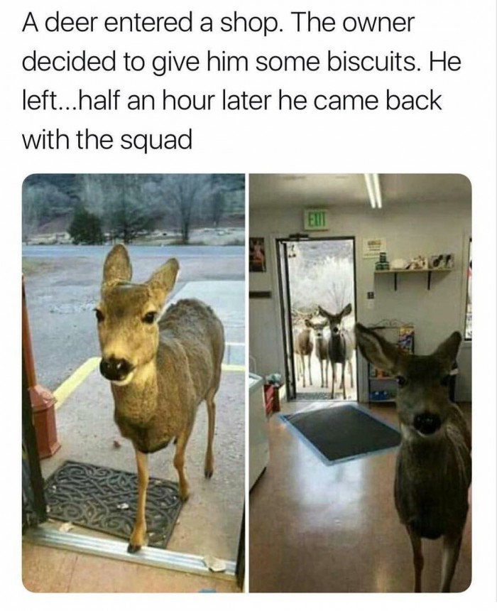 Don't feed the deer with biscuits...