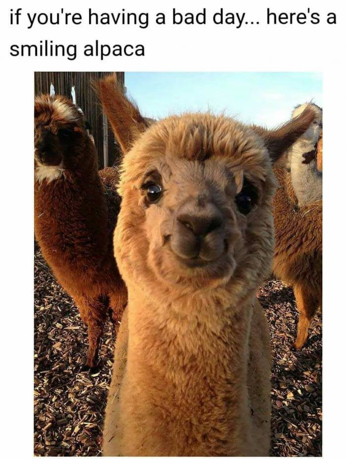 Alpaca - If you're having a bad day...