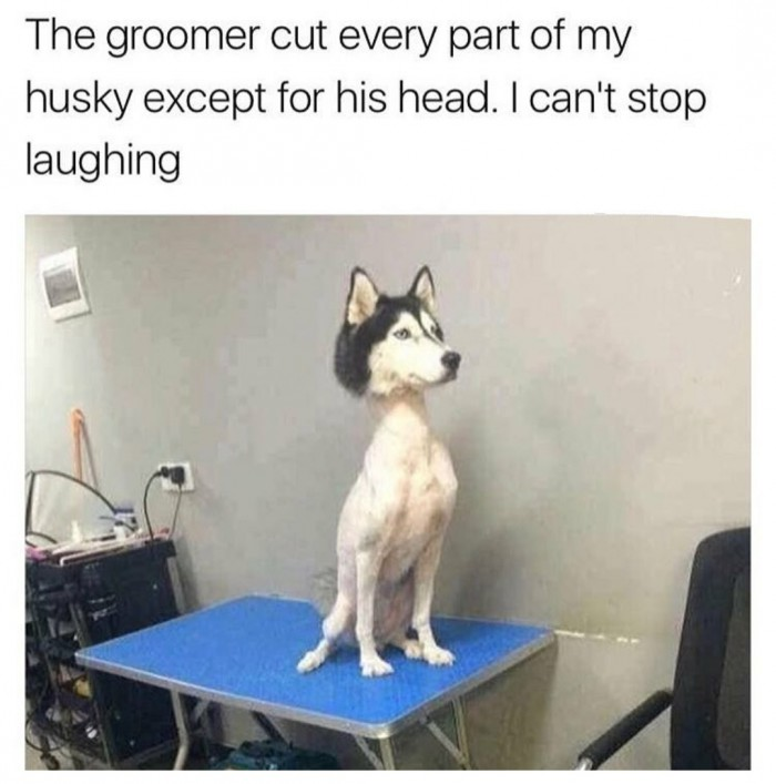 The groomer cut every part of my husky except for his head..