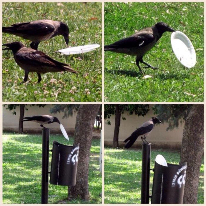 This crow cares about the environment...