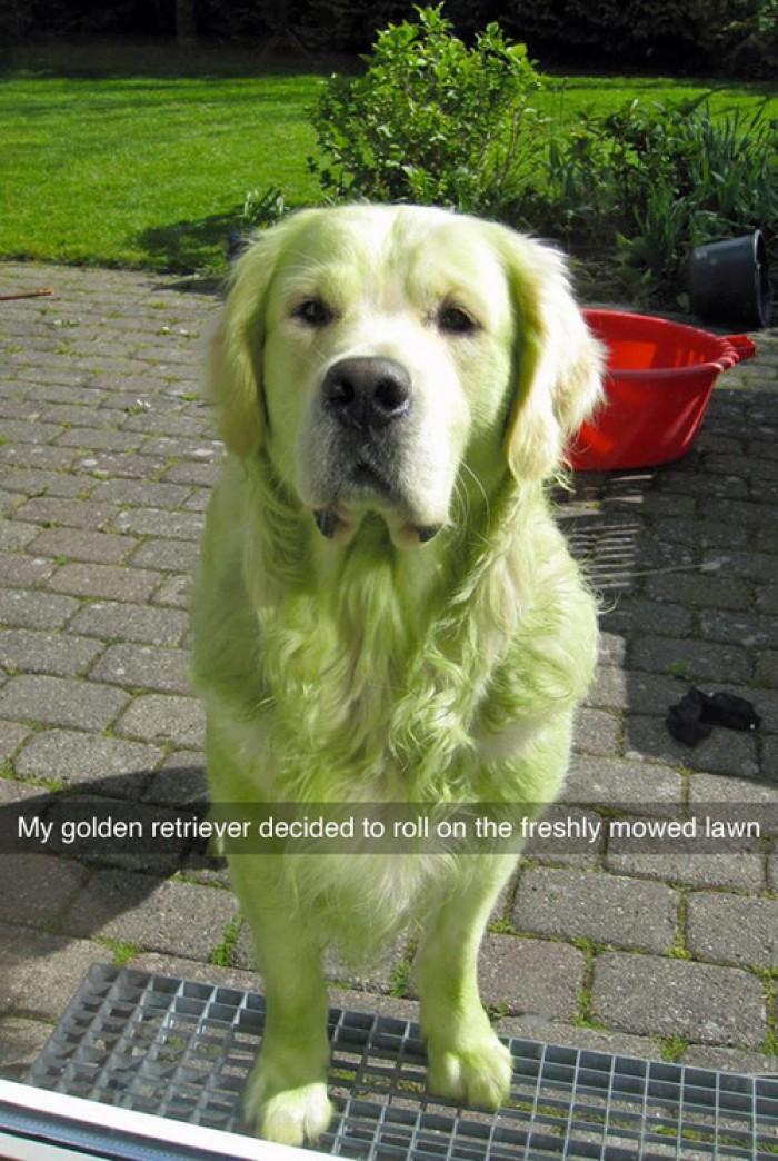 Hulk Dog!