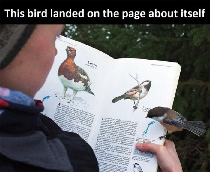 This bird landed on the page about itself ...