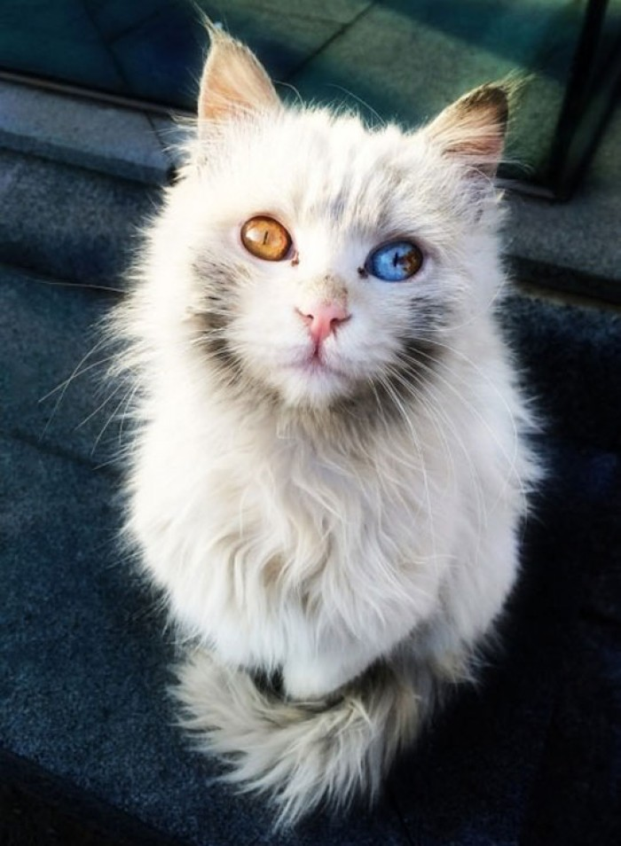 Fire And Ice In This Cat's Eyes