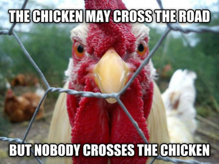 The Chicken May Cross The Road
