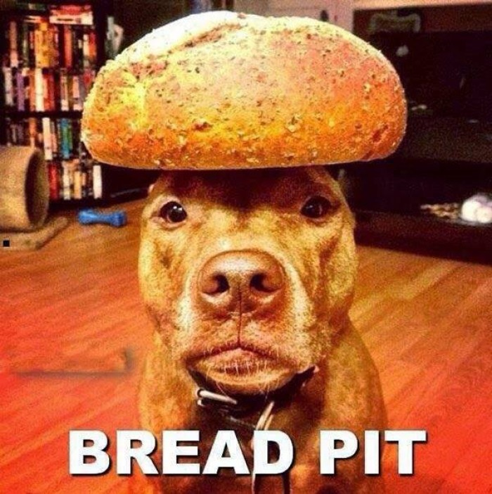 Funny Bread Pit Dog