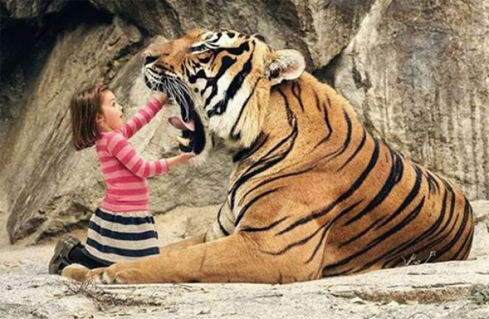 A little girl and a big tiger