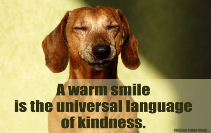 William Arthur Ward - A warm smile is the universal language of kindness.