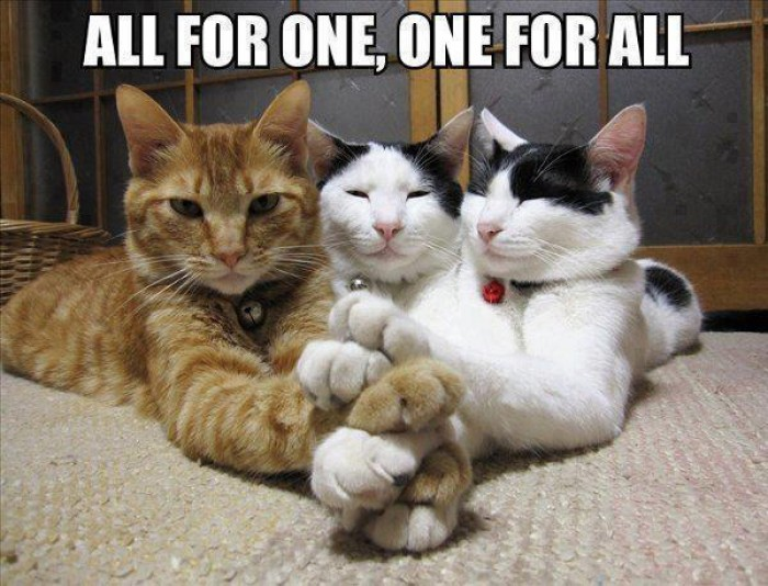 The power of teming! All for One, and One for All. Cat edition :)