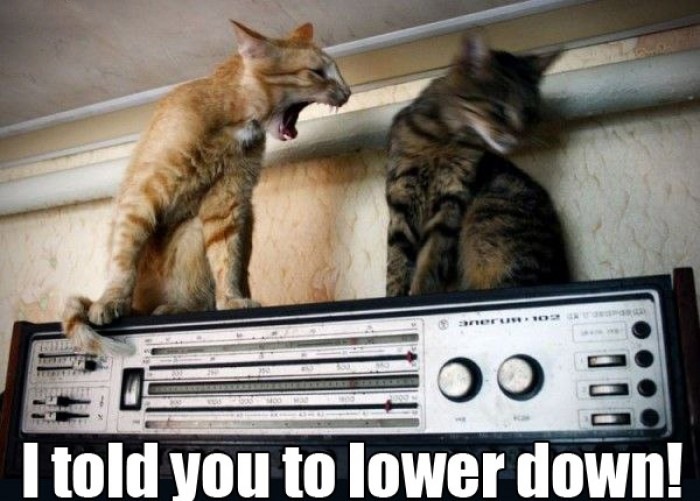 "Cat yelling ""I Told You To Lower Down!"""