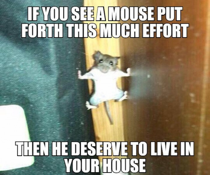 If you see a mouse put forth this much effort...