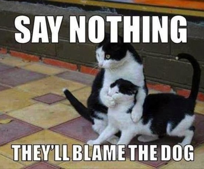Say nothing, they'll blame the dog