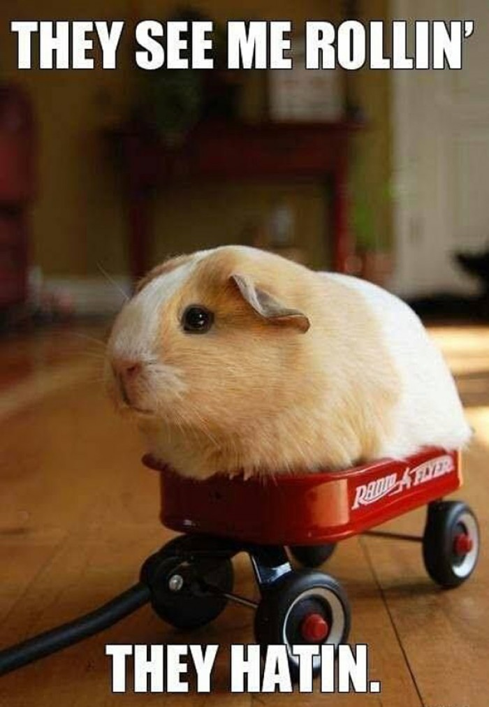 They see me rollin' they hatin.