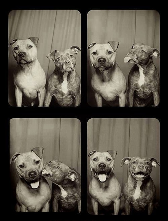 This Is what happens when you put dogs in a photo booth.