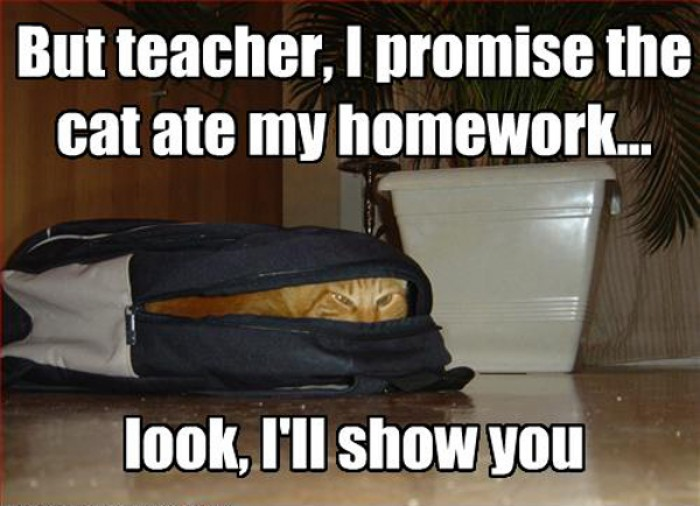 But teacher, I prommise the cat ate my homework!