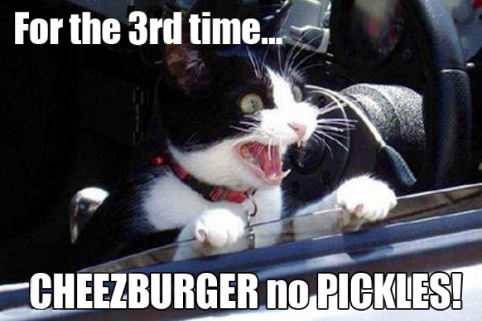 "Cat yelling ""Cheezburger no pickles!!!"""