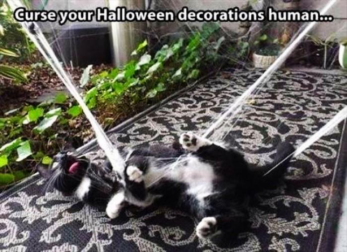 Curse your halloween decorations human