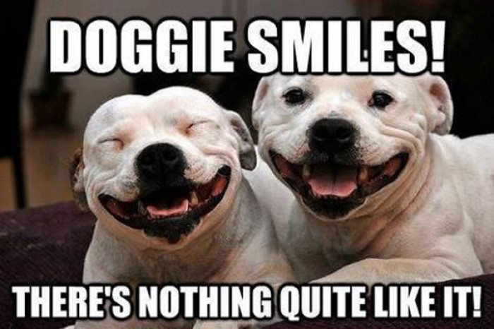 Doggie adorable smiles