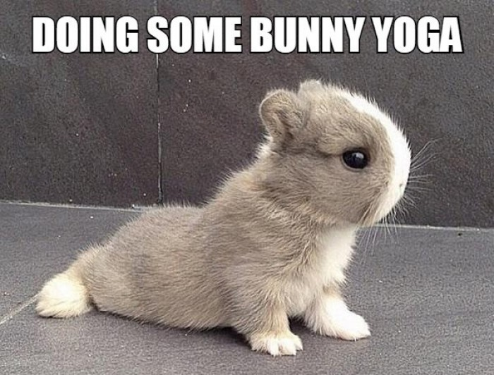 Doing some bunny yoga