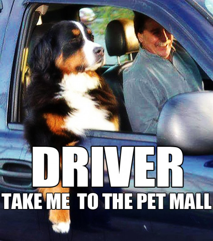 Driver, take me to the Pet Mall!