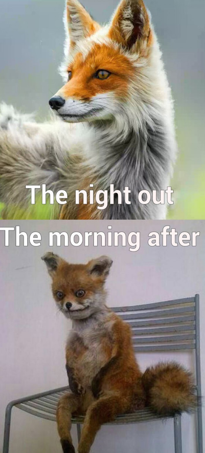 The night out and morning after