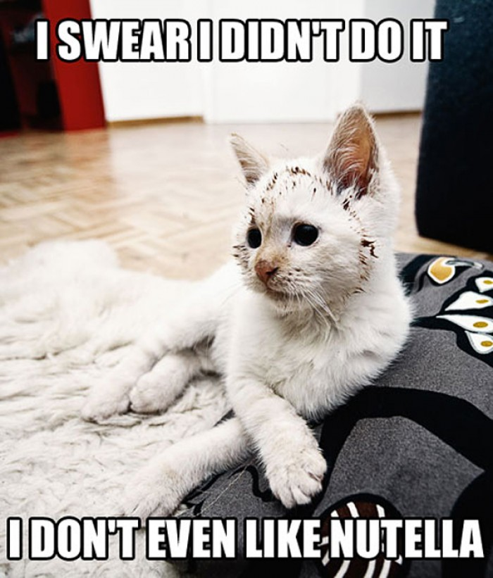 Funny cat denies she was touching Nutella