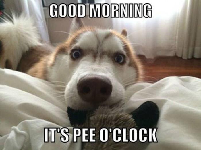 Good Morning It S Pee O Clock Cute Dog 9buz