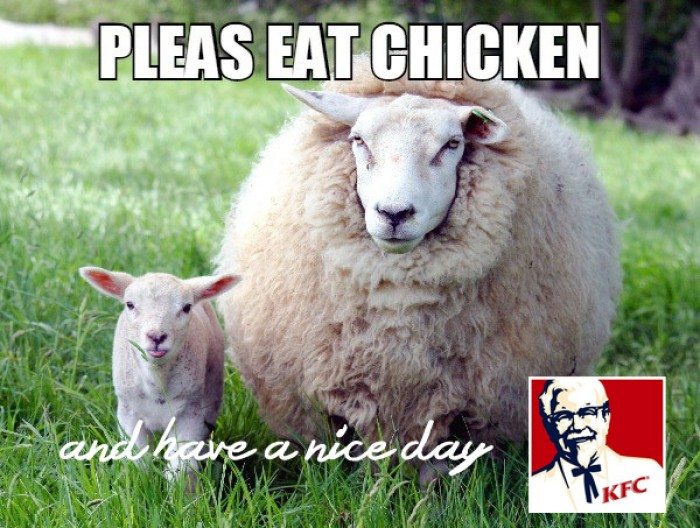 Sheep appeal, please eat chicken