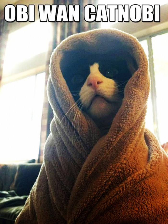 Obi Wan Cat
