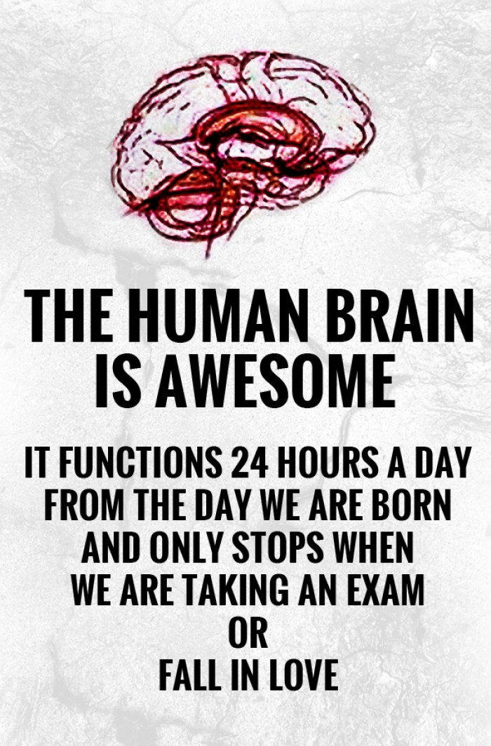 Human Brain Is Awesome