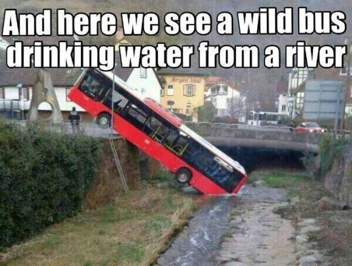 And here is the wild bus drinking water from river