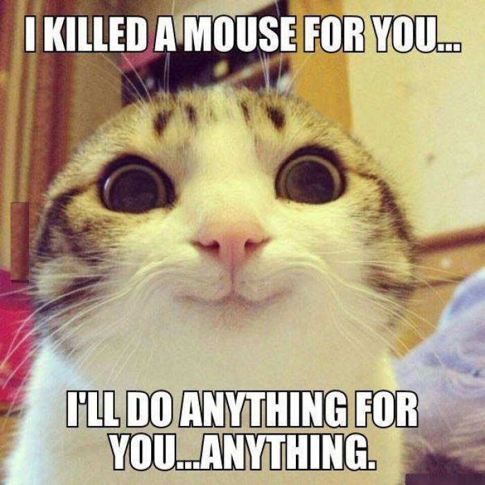 I killed a mouse for you…  (Overly attached cat)