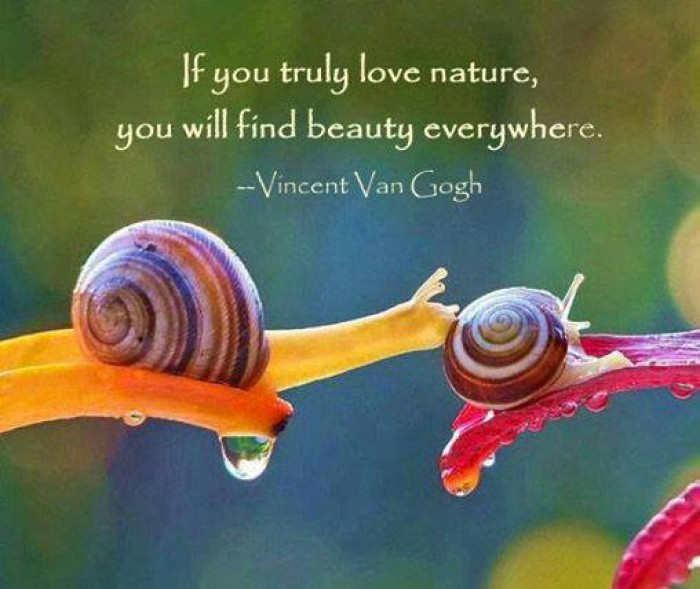 "Vincent van Gogh - ""If you truly love nature, you will find beauty everywhere."""
