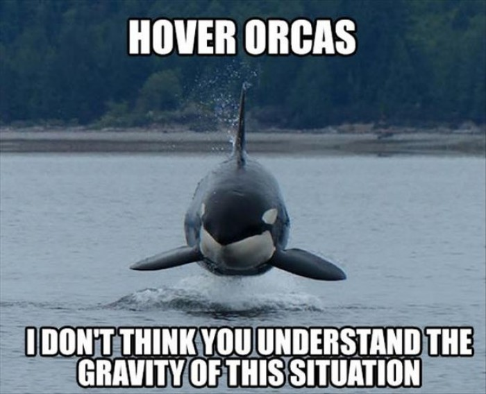 Hover Orcas