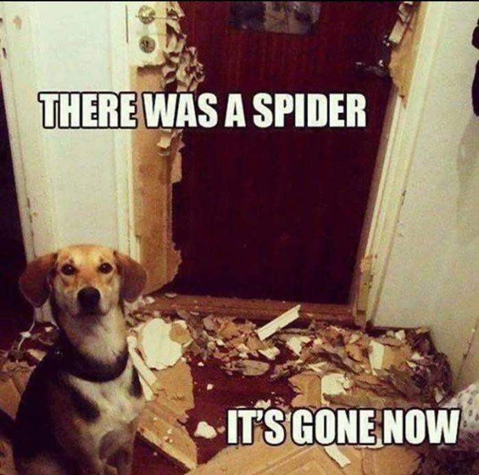 Dog - There was a spider...