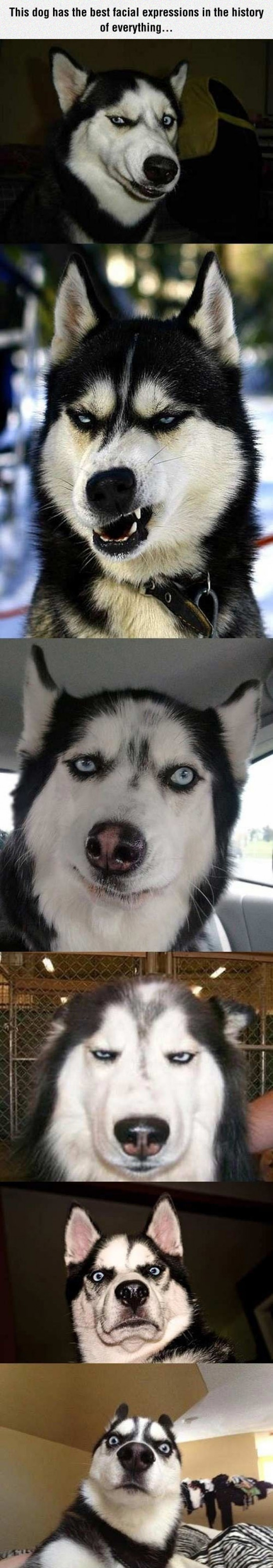 This dog has the best facial expressions...
