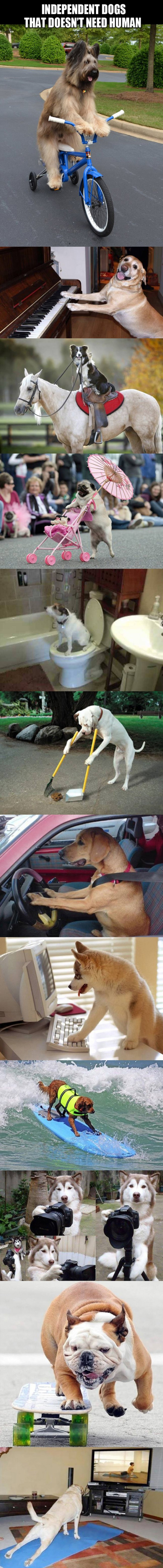12 Independent Dogs That Doesn't Need Man