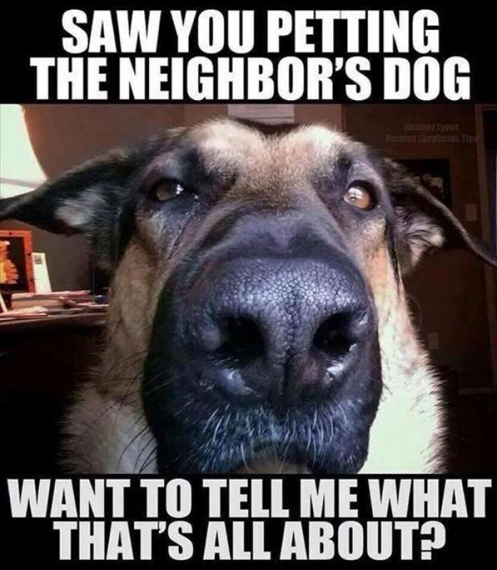 Saw you petting the neighbors dog.