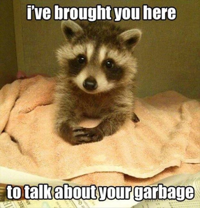 Raccoon - I've brought you here to talk about your garbage..