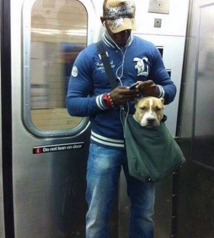 The New York subway system bans canines