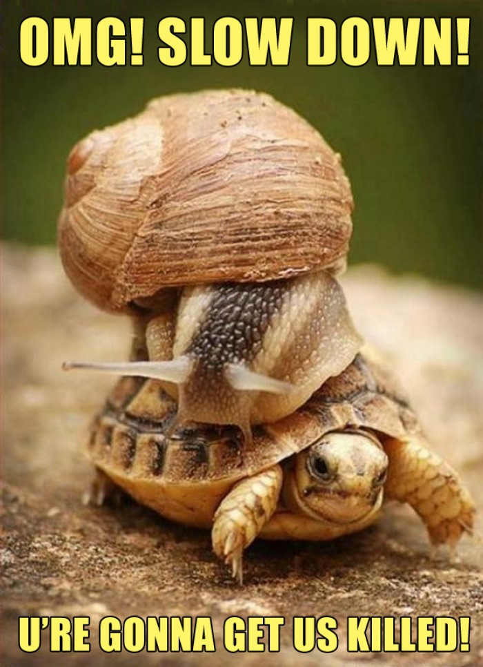Snail ridding on the turtles back