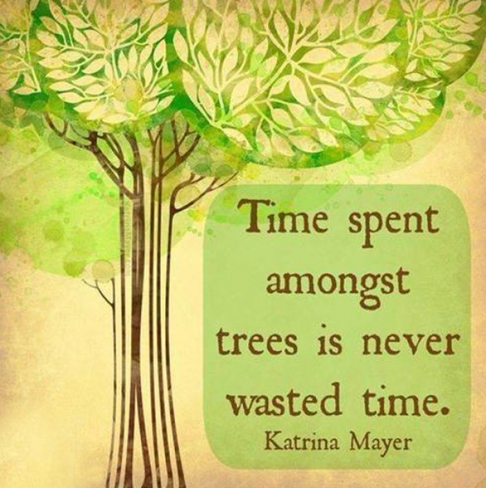 Katrina Mayer - Time spent amongst trees is never wasted time.