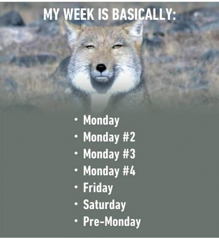 My Week is Basically...
