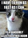 Cat - I Have to run as fast as I can to a randomly selected other room