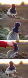 Hedgehog With The Hat