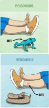 Know The Difference Between Poisonous And Venomous