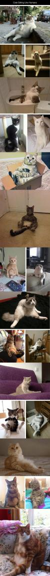 Cats Sitting Like Humans